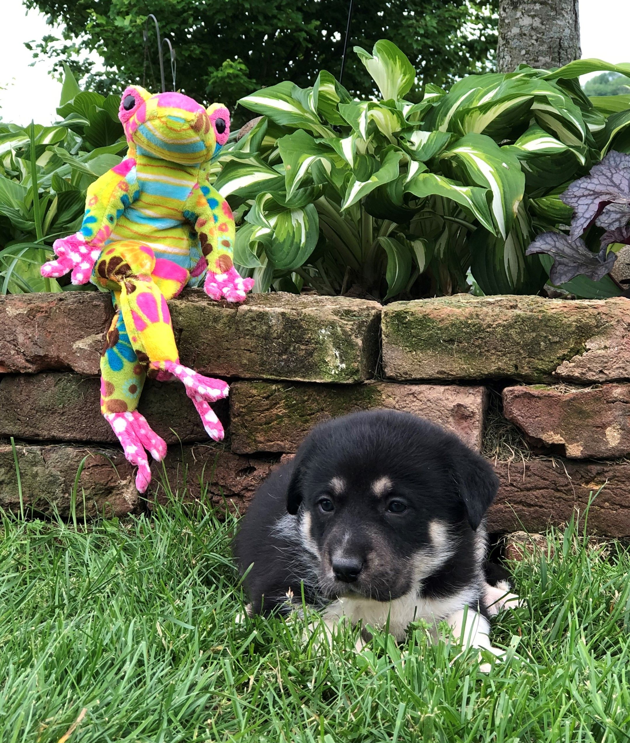 Madison : Dogs for sale in ky